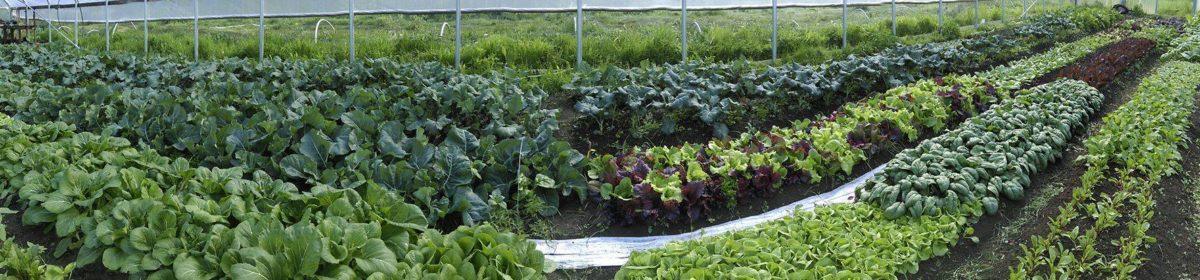 Mama Tee's Farmstead